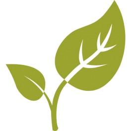 Cassis feuilles coupées